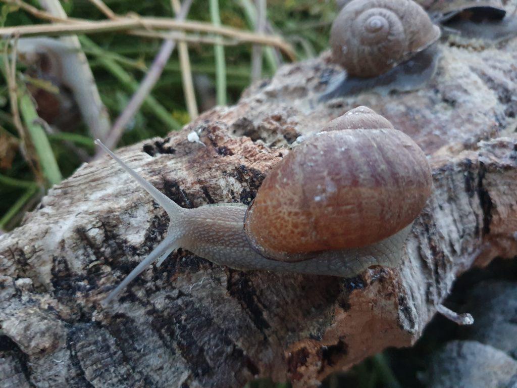 Escargots de près 4